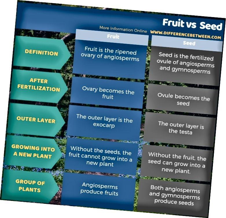الفرق بين الفاكهة والبذور في شكل جدول