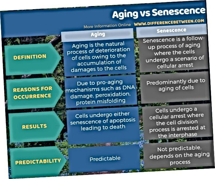Разлика между стареене и стареене в таблична форма