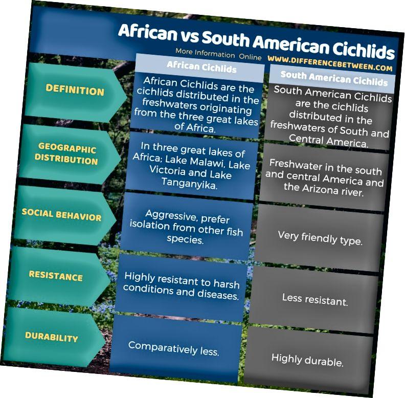 Разлика между африканските и южноамериканските цихлиди в таблична форма
