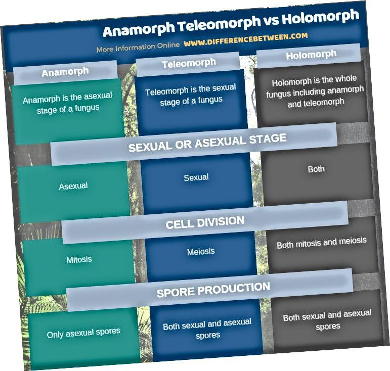 Rozdíl mezi Anamorph Teleomorph a Holomorph v tabulkové formě
