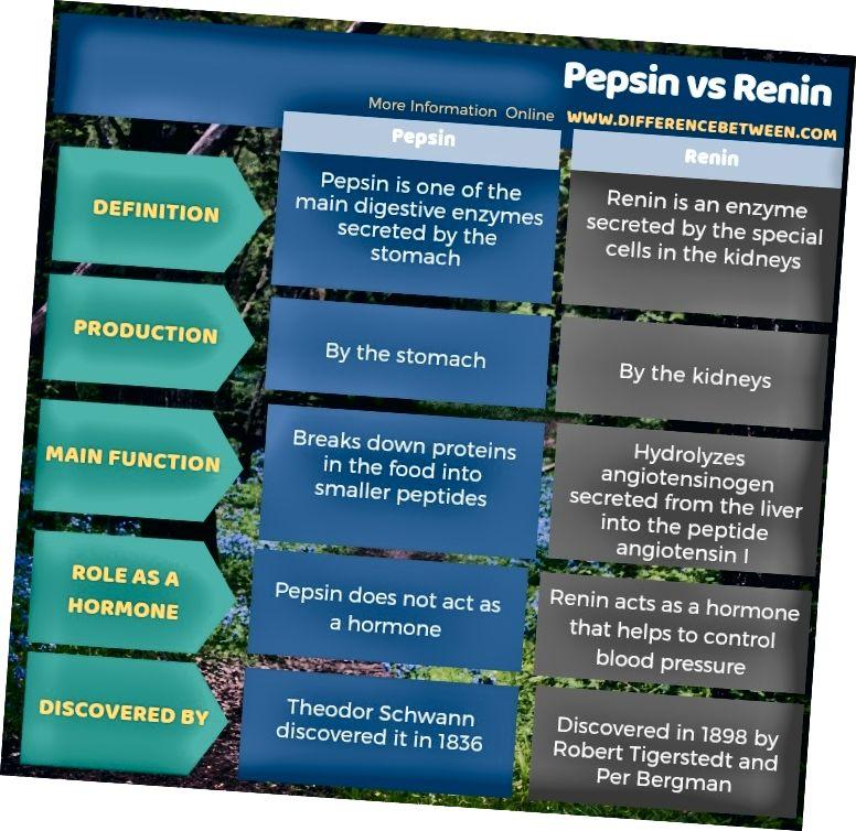 Mismunur á milli Pepsin og Renin í töfluformi