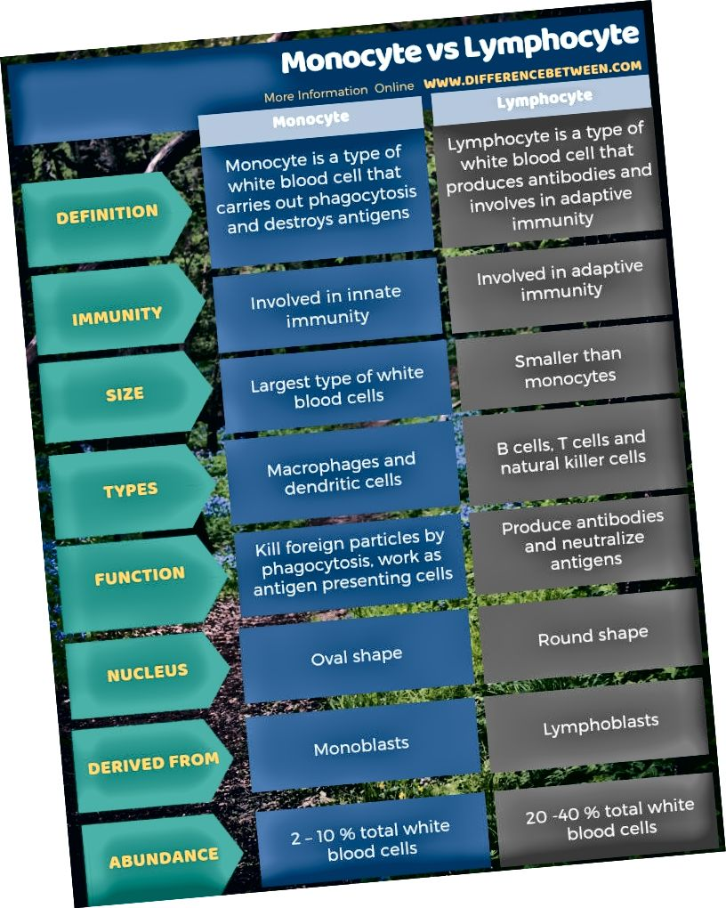 Diferències entre monòcits i limfòcits en forma tabular