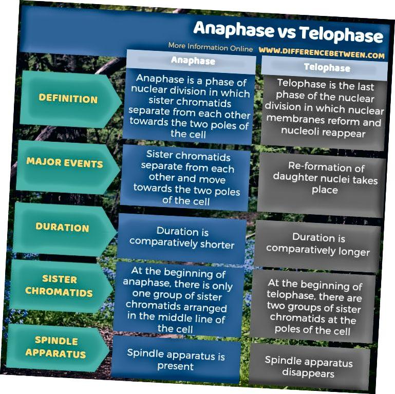 Rozdíl mezi anafázou a telopázou v tabulkové formě