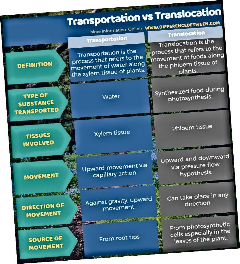 Transportimise ja translokatsiooni erinevus tabelina
