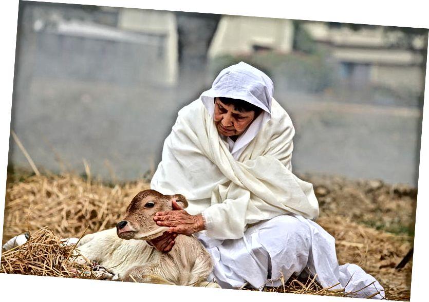 Skillnaden mellan medlidande och medkänsla