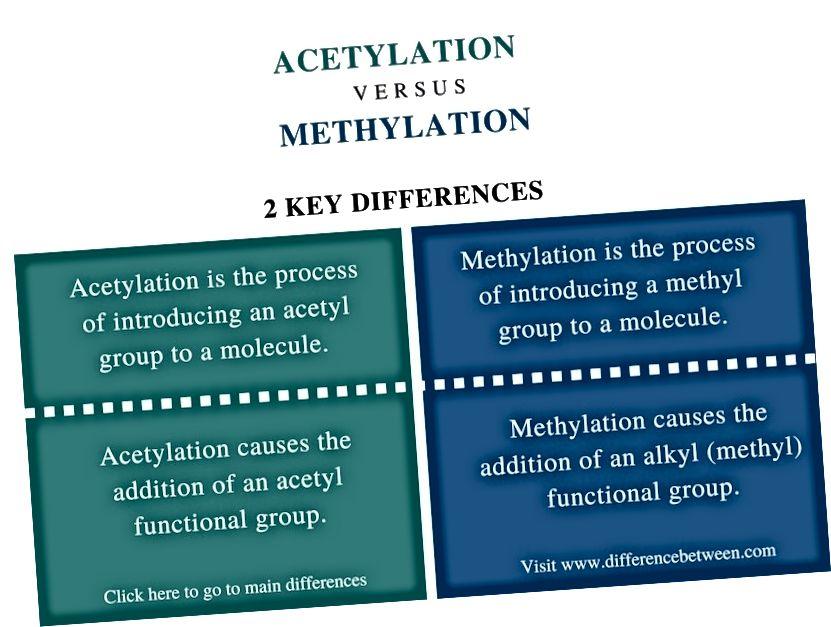 Diferència entre acetilació i metil·lació_ Resum de comparació