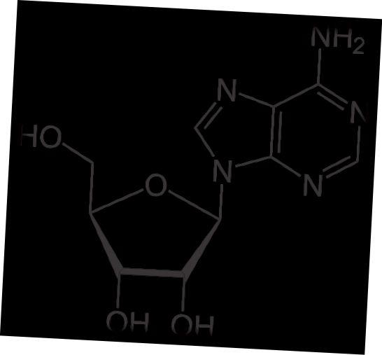 Diferència clau: Adenosina i Adenina