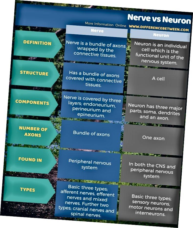 Diferència entre nervi i neurona en forma tabular