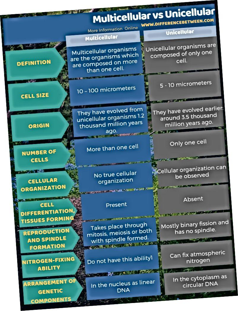 Diferència entre pluricel·lulars i unicel·lulars en forma tabular
