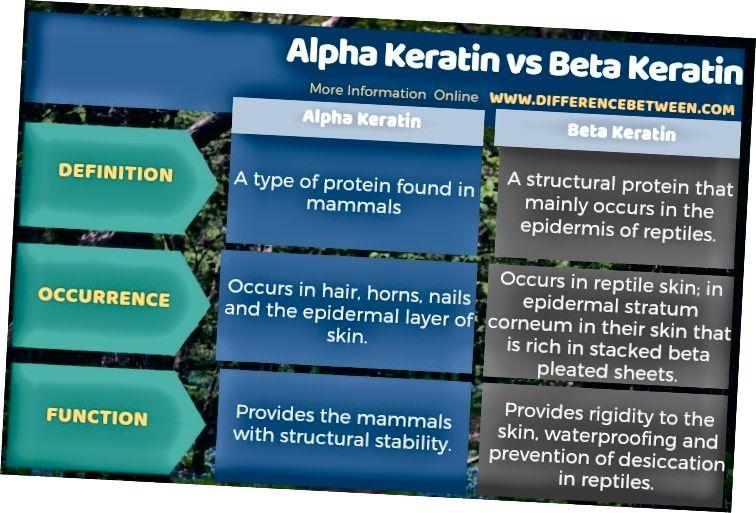 Разлика между Алфа Кератин и Бета Кератин в таблична форма