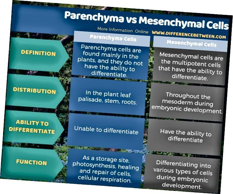 Parenhüümi ja mesenhümaalsete rakkude erinevus tabelina