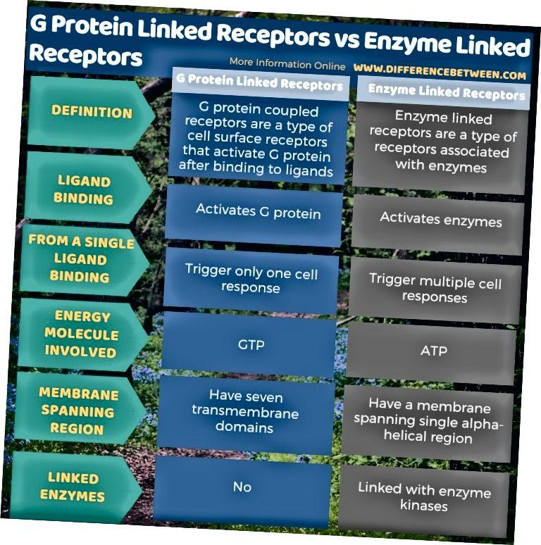 الفرق بين المستقبلات المرتبطة بالبروتين G والمستقبلات المرتبطة بالإنزيم في شكل جدول