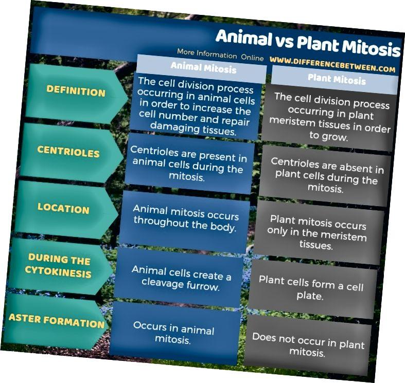 Rozdíl mezi mitózou zvířat a rostlin v tabulkové formě