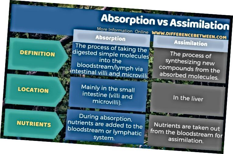 Разлика между абсорбция и асимилация в таблична форма