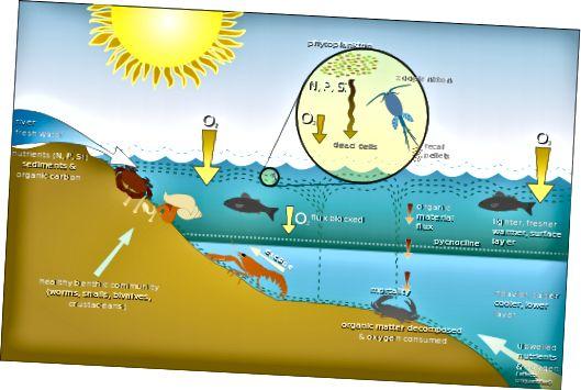 Diferència entre Nekton, Plàncton i Benthos