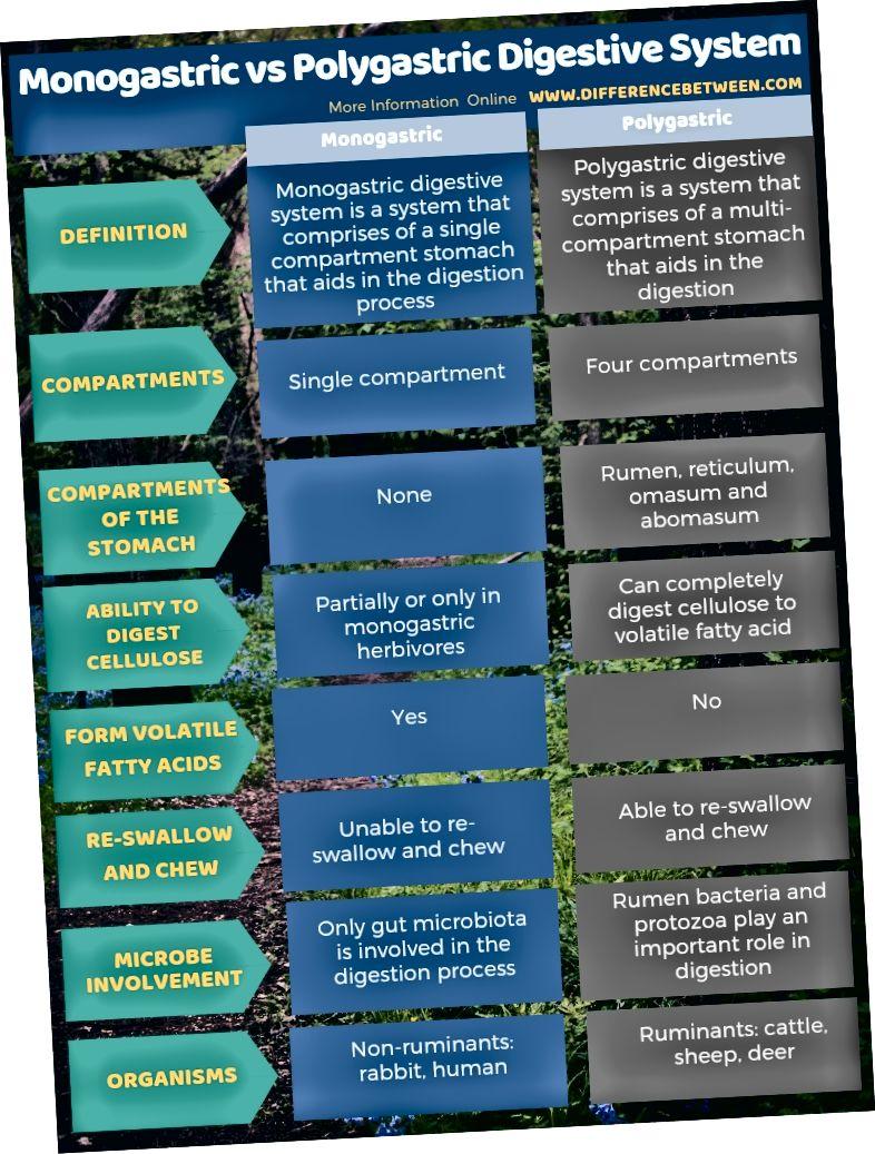 Diferència entre el sistema digestiu monogàstric i el poligàstric en forma tabular