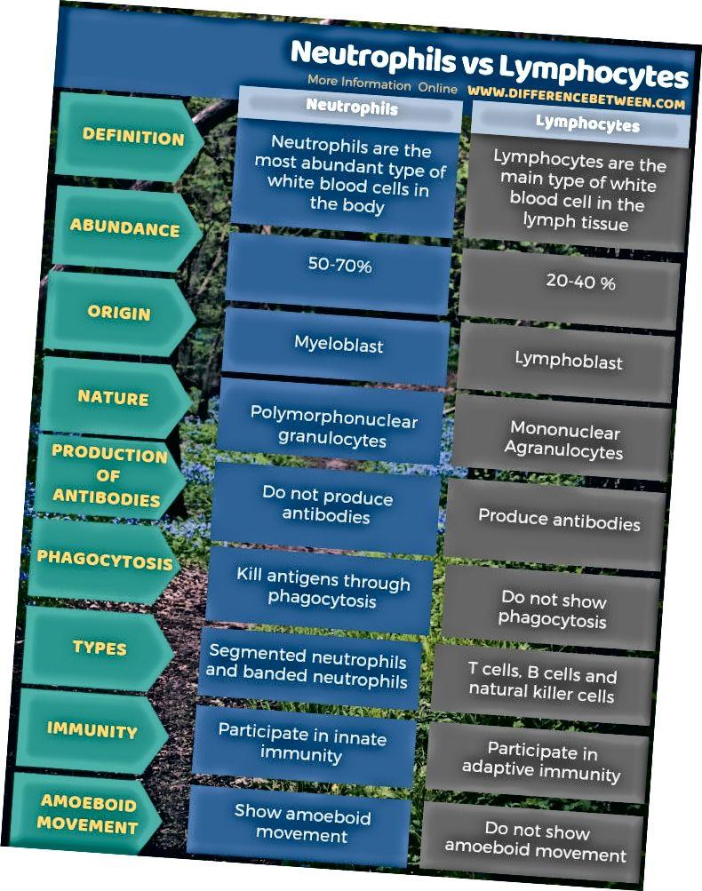 Diferència entre neutròfils i limfòcits en forma tabular