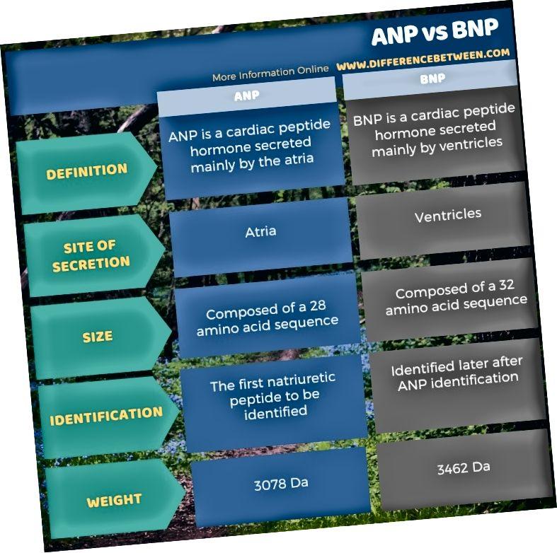Разлика между ANP и BNP в таблична форма