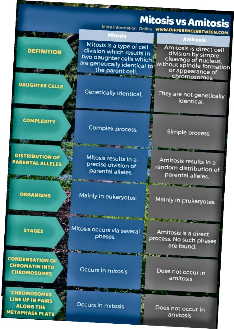 Perbedaan Antara Mitosis Dan Amitosis 2020