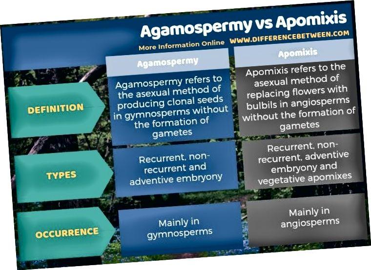 Atšķirība starp agamospermiju un apomixis tabulas formā