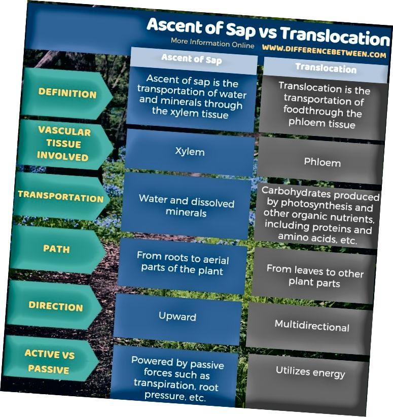 Разлика между изкачването на сок и транслокацията в таблична форма
