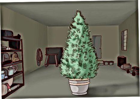 Plantando a árvore do lado de fora