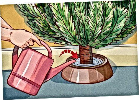 Adicionando água ao suporte da árvore
