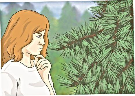 Tria l'arbre adequat