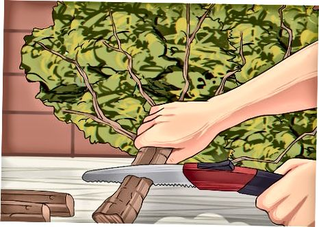 Membuang Pohon Anda sebagai Limbah Normal
