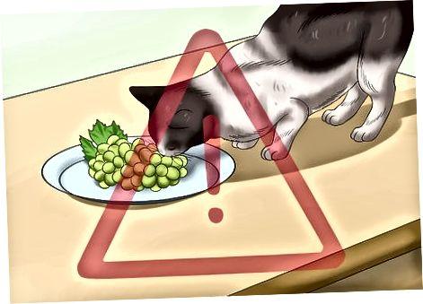 आपल्या मांजरीचे हानिकारक अन्नापासून संरक्षण