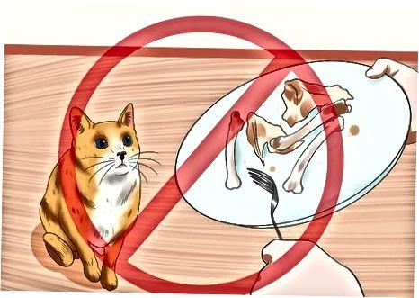 Bảo vệ mèo của bạn khỏi thức ăn có hại