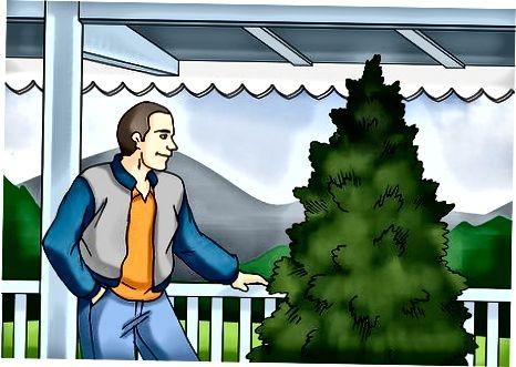 Merawat Pohon Anda Di Dalam
