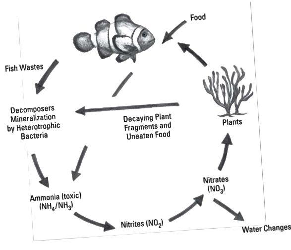 nitrogen syklus