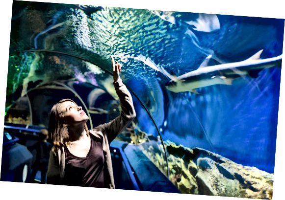 обществен аквариум