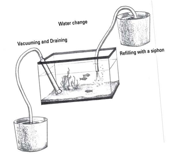 skiftende akvariumsvann