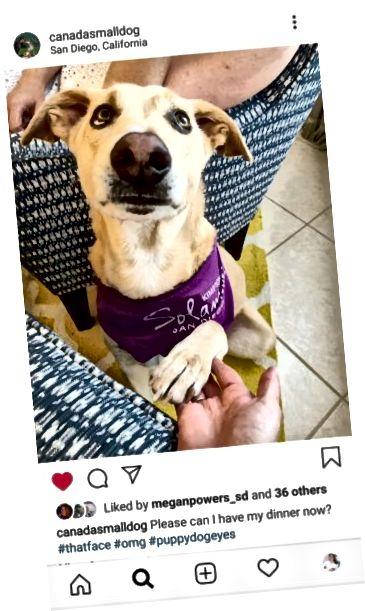 Снимка на куче в Instagram