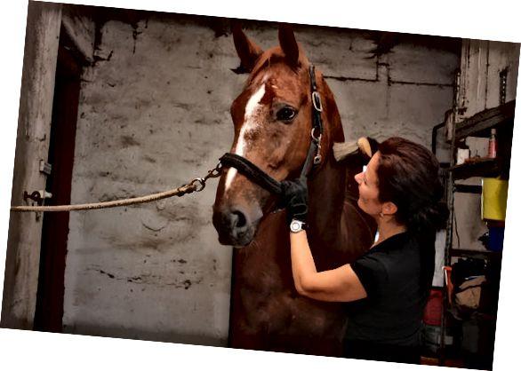 отглеждане на коне