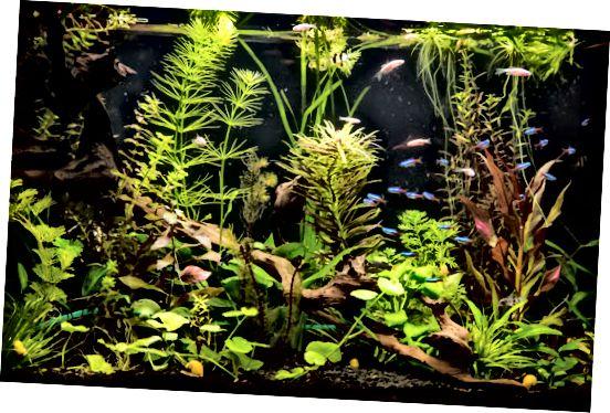 akwarium słodkowodne z rybami