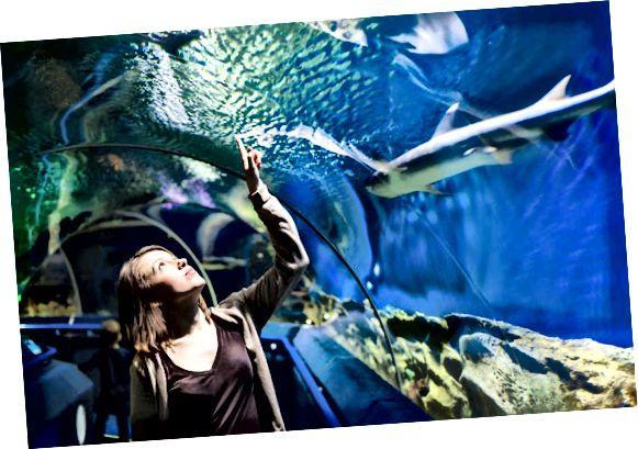 offentligt akvarium