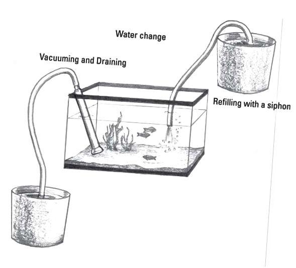akvarium vand skiftende