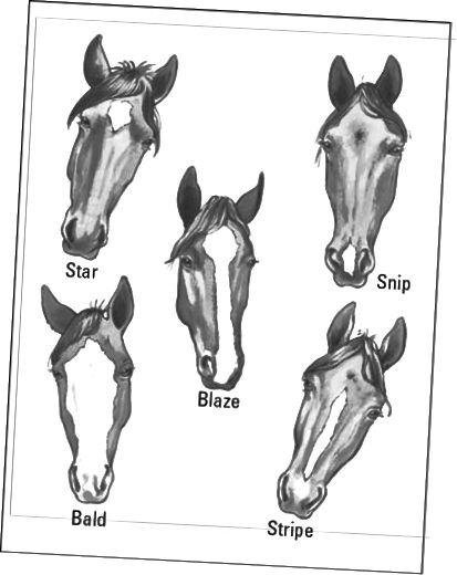 heste ansigt markeringer