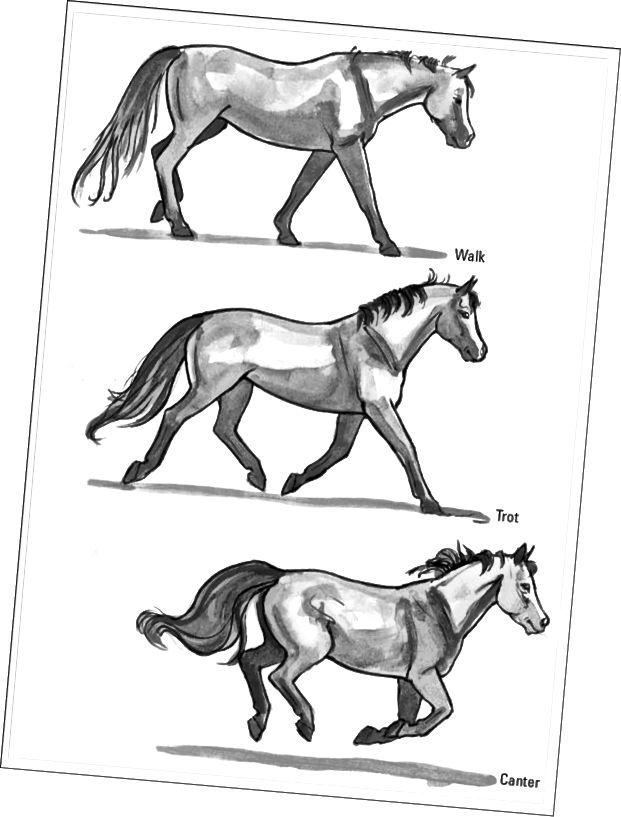 Illustrerede hestebevægelser