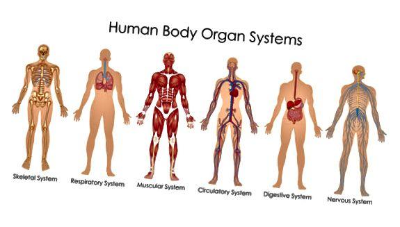 телесни системи