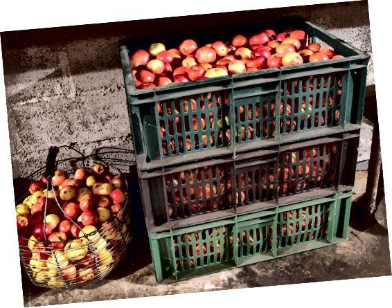 सजातीय पर सेब का भंडारण
