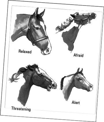 vanlige heste ansiktsuttrykk