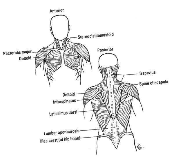 nakke- og skuldermuskler