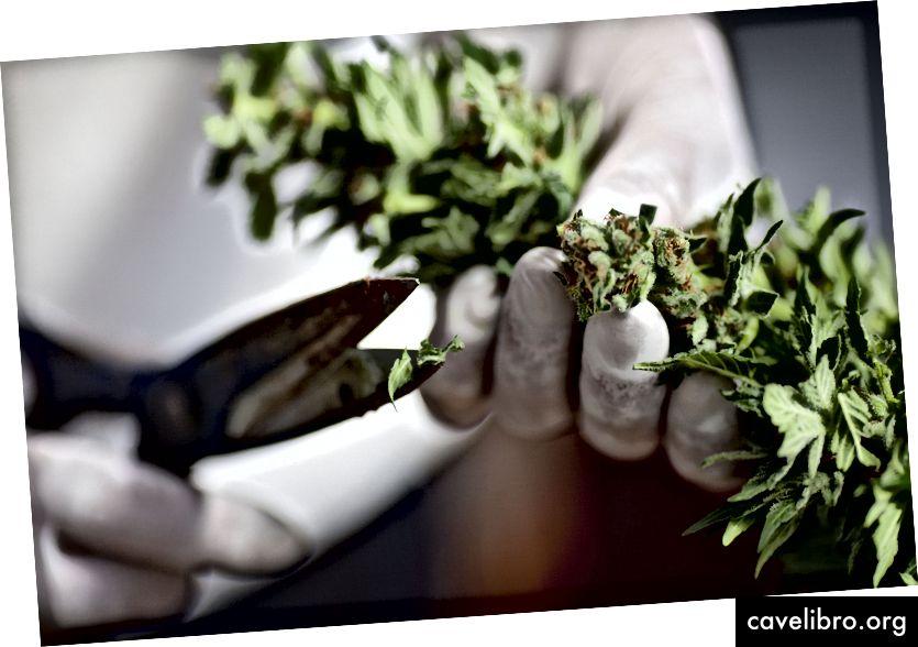La DEA affirme qu'elle modifie les règles - mais cela changera-t-il quelque chose pour les chercheurs sur le cannabis? Crédit: Getty Images
