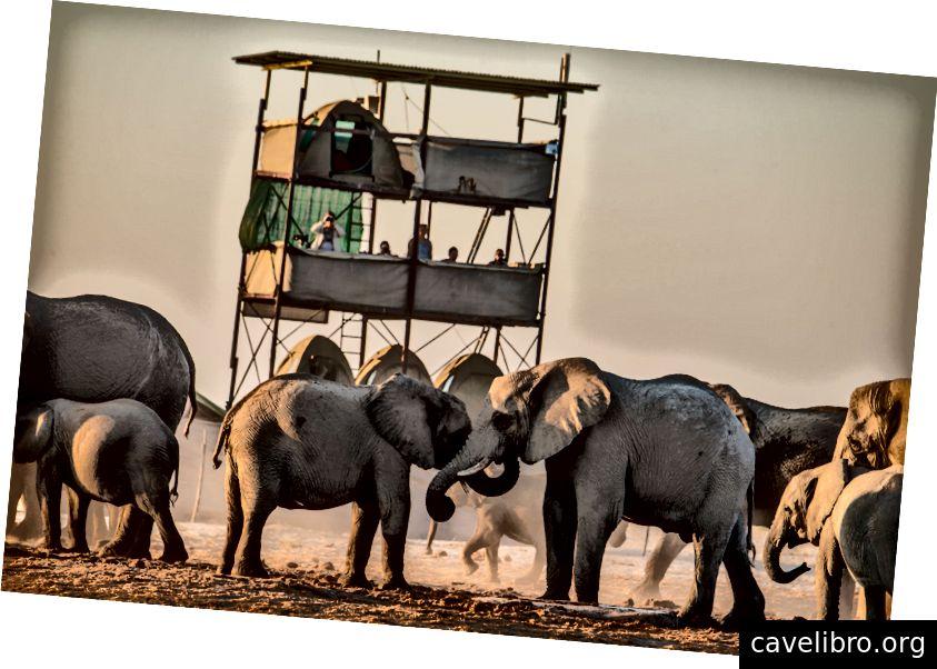 PROCHE QUARTIER: La proximité de la tour de recherche avec le point d'eau de Mushara permet d'observer et de surveiller quotidiennement le comportement des groupes familiaux.