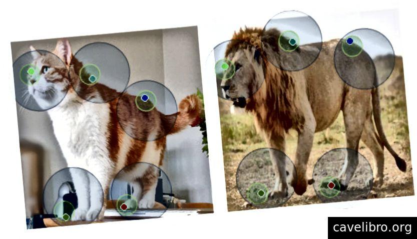 Une correspondance mappant des points d'un chat à un lion.1