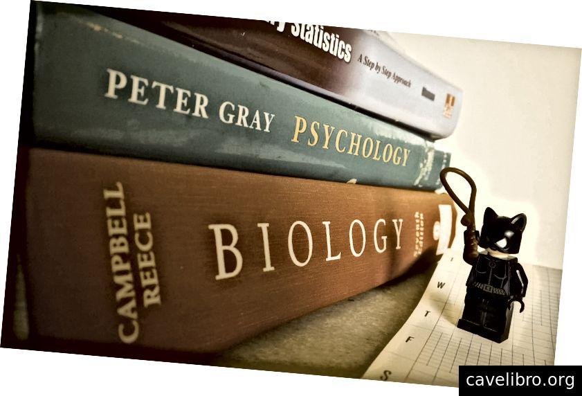 कैटवूमन आपकी किताबें चोरी करने से पहले अपनी पढ़ाई पूरी कर लें। (फोटो: एश्ले जुविनेट)